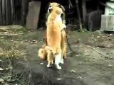 Настоящая любовь между кошкой и собакой