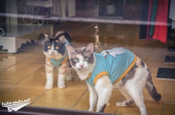 магазин с кошками фото