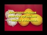 Антипаразитарная очистка с помощью чеснока и лимонов. Как избавиться от паразитов.