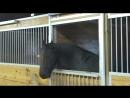 Для этой лошади, в конюшне существует засовов. самое умное животное