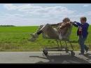 Несносный дед Трейлер 720p