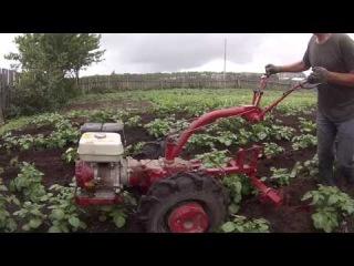 окучивание картофеля мотоблоком МТЗ 09 Н