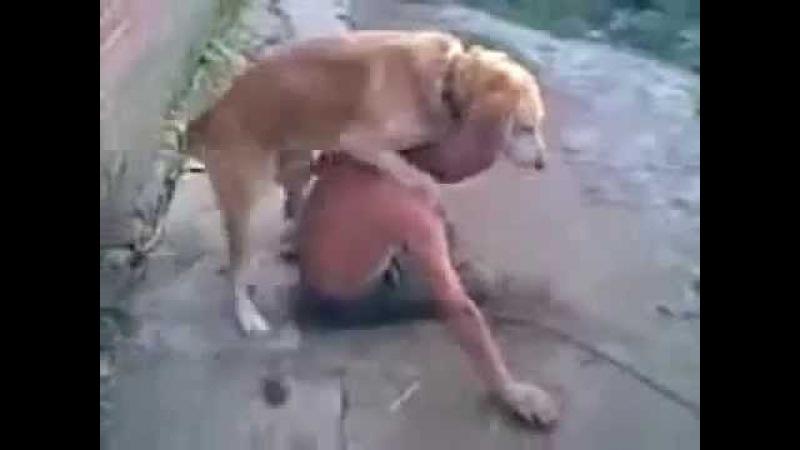 Собака трахает алкаша.