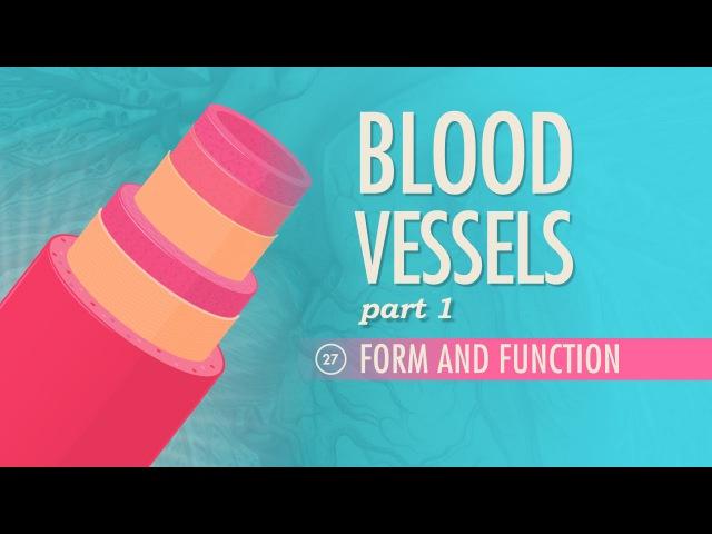Blood Vessels, part 1 - Form and Function: Crash Course AP 27