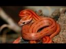 ЗМЕИ 9 Мифов О Змеях! ИНТЕРЕСНОСТИ_0_1437441428552
