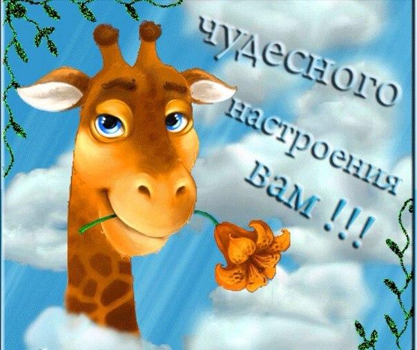 http://cs623828.vk.me/v623828637/31eb5/41Hux6mPVMQ.jpg