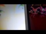 кошка тора поёт свою песню