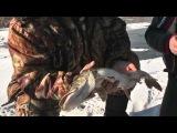 Зимняя рыбалка - последний лед под Астраханью.