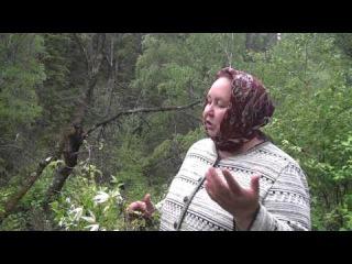 Княжник сибирский (дикий хмель) - Atragene sibirica L.