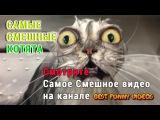 Самые смешные котята 2015. Смешное Видео про котов, кошек и котят 2015. Приколы с животными