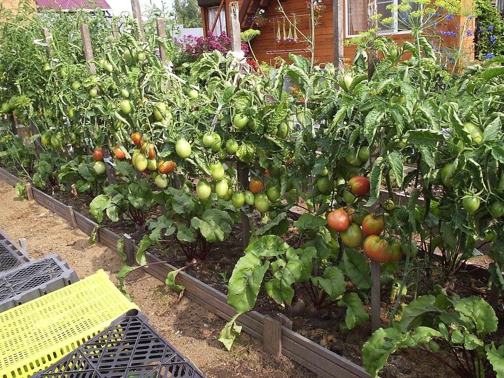 схема посадки помидоров в грунт