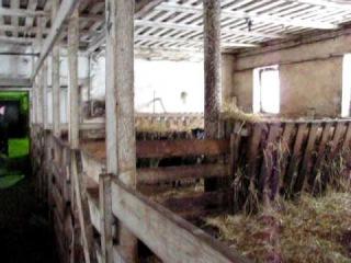 Овцевод и свиновод Расул