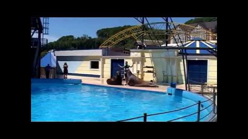 Дельфинарий в п. Небуг Туапсинского р-на Краснодарского края