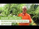 Размножение плодовых деревьев