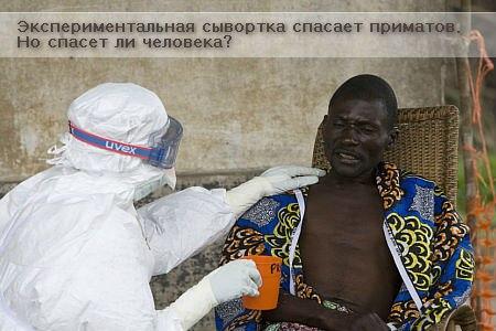 Лихорадка Эбола. Экспериментальная сыворотка.