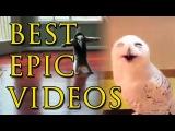 Best Epic Funny Videos of May 2015 #3 - Приколы и неудачи. Подборка видео за Май 2015 #3