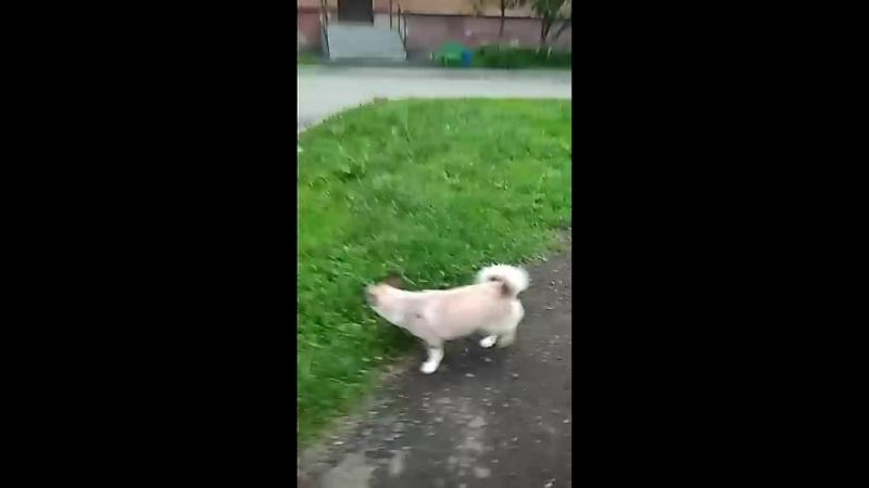 гуляем с собакой