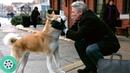 Хатико приносит мяч Паркеру. Хатико: Самый верный друг (2009) год.