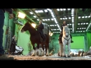The HOBBIT BOTFA BTS Thranduil's Moose HD mp4