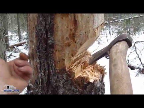 Заготовка дров. Безопасная валка сухостоя. Дрова на НОДЬЮ. Безопасный подруб ствола.