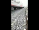 Liveleak - Guy committed suicide