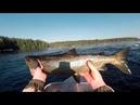 Не реально сильная рыба смотрите уверен вам понравится