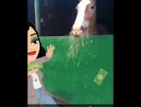 love my horse ❤