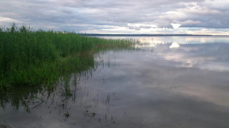 Побережье озера Нарочь у деревни Степенёво, пляж бывшего палаточного городка №1 (24.06.2018)