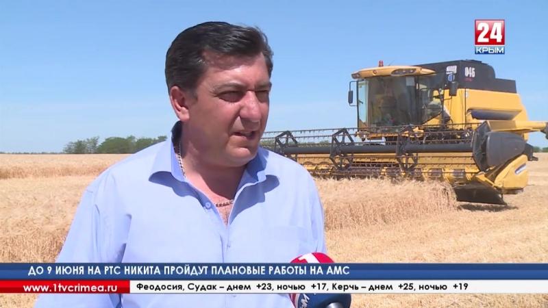 К уборке зерновых приступили крымские аграрии. По их прогнозам, урожая хватит на все нужды
