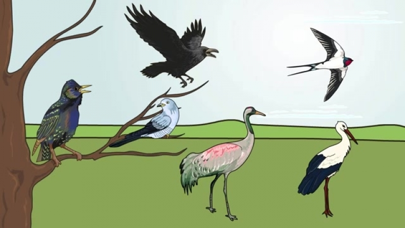 Мультфильм про перелетных птиц для дошкольников.