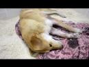 В Смоленской области из карабина расстреляли собаку