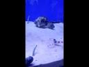 песчаный угорь, морской огурец, креветка