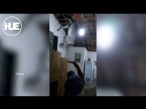 В Бразилии осел десантировался на крышу сарая, проломил черепицу, повисел и сбежал