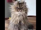 Без кота и жизнь не та...))