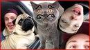 VLOG ● Везём МОПСА И КОТА к ветеринару!🚑 Реакция Леры на подаренного Котенка! 🐈