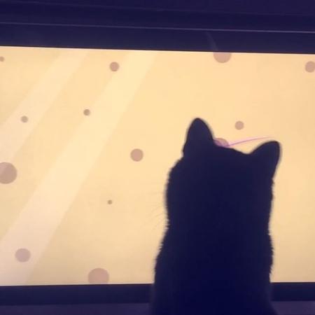Кот VS компьютерная мышь 🐭