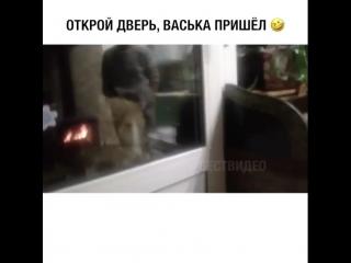 Кот говорит:Открой дверь, Васька пришёл!