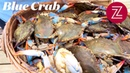Chesapeake Bay Blue Crab Seafood at the Source Season 2 Episode 4