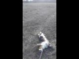 собака не хочет идти на охоту!