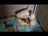 А потому что любовь к коробочкам - она с детства! ))