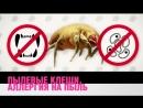 Пылевые клещи и аллергия на пыль