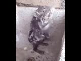 Вы когда-нибудь видели как моется крыса