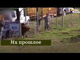 Животные, которых спасли из цирка