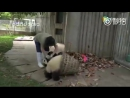 Pandas driving cleaning lady crazy ^ ^