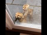 Откройте двери, а то у нас лапки