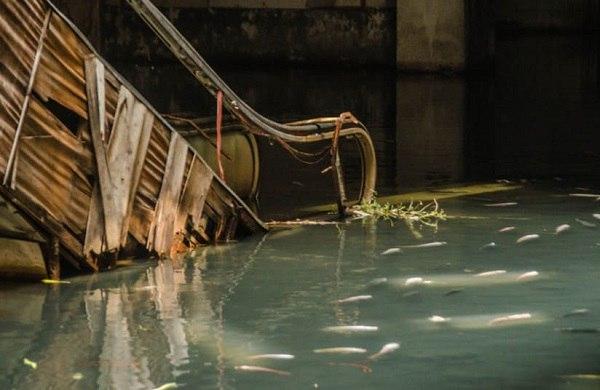 рыбы в заброшенном торговом центре в бангогке таиланд