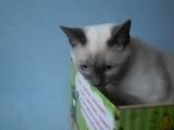 Командор Зейн в коробке