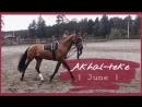 AKHAL TEKE Vibes June