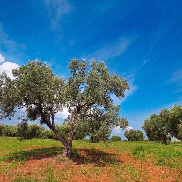Минеральные Воды: ПРЯМЫЕ рейсы в Салоники с захватом майских праздников всего за 10500 рублей туда-обратно