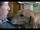 Арктур, гончий пёс